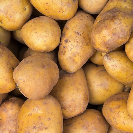 Yukon Gold Yellow Potatoes